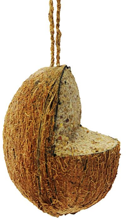 Kokosnöt med fågelmat