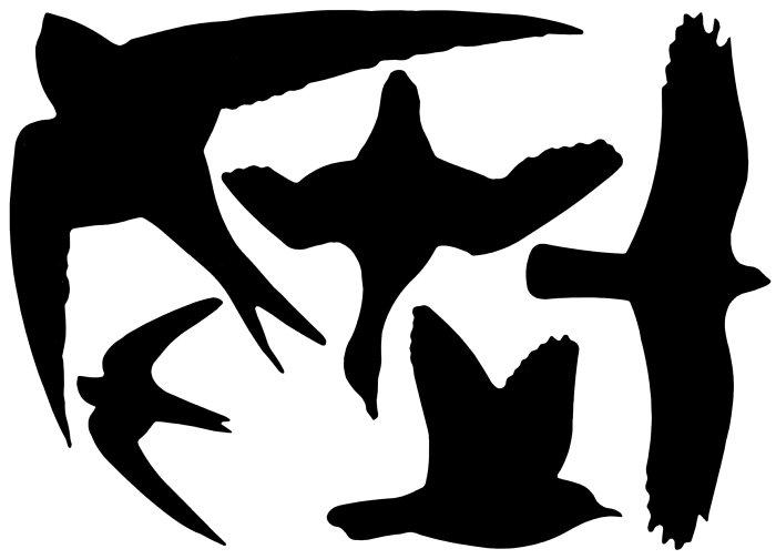 Klistermärken Fågel