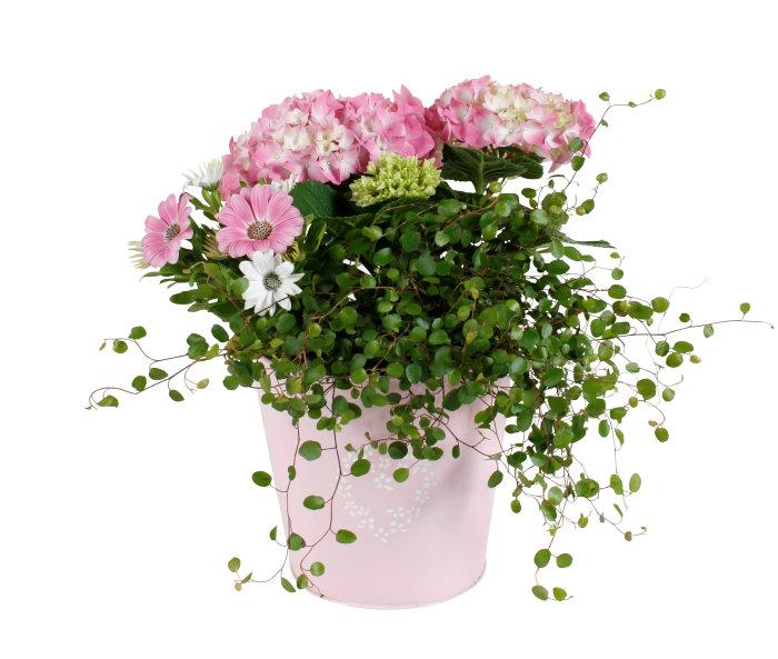 Blomstergrupp i kruka