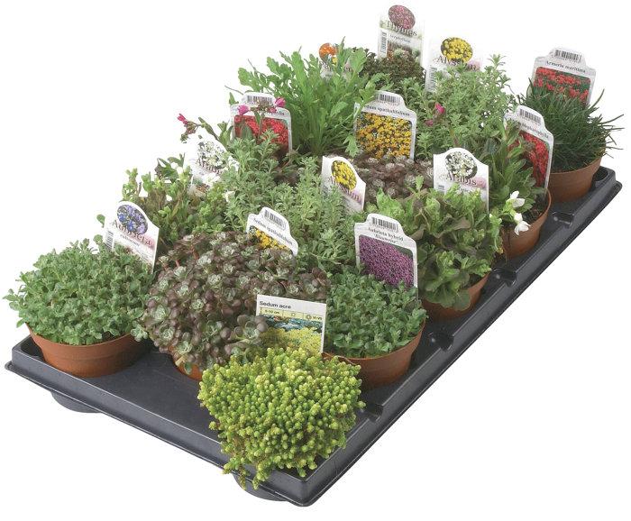 Stenparti växter 11 cm