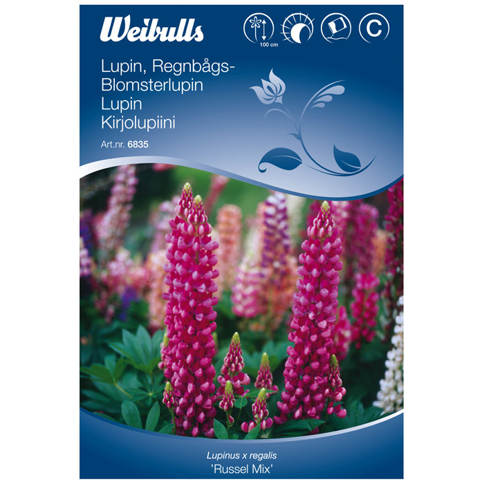 Blomsterlupin - Russel mix