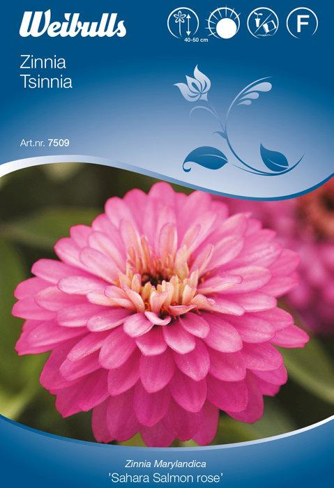 Zinnia - Sahara Salmon Rose