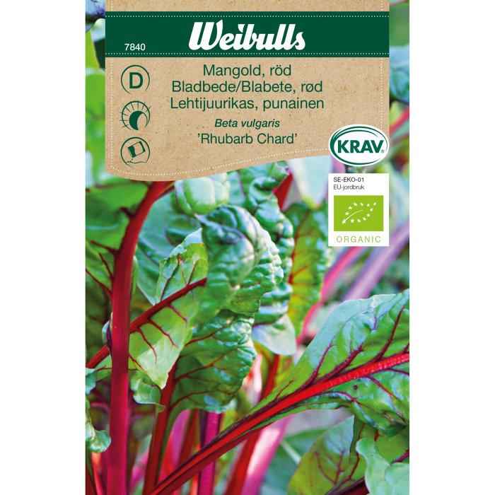 Bladbede, rød økologisk - Rhubarb Chard