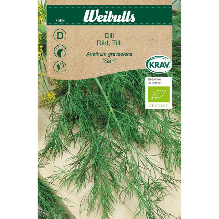 Dild økologisk - Sari