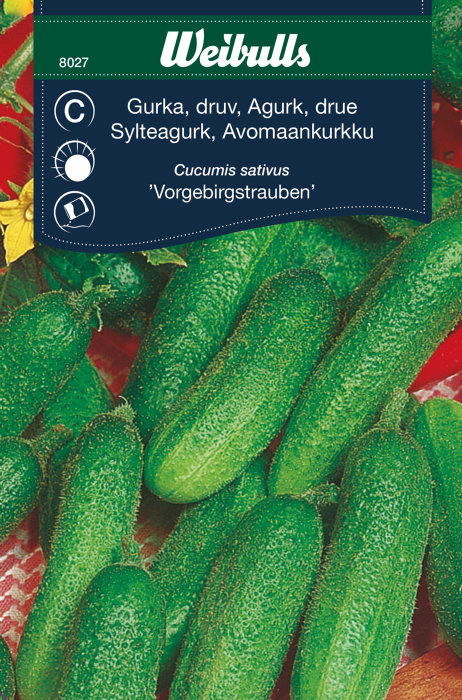 Drueagurk/ sylteagurk friland