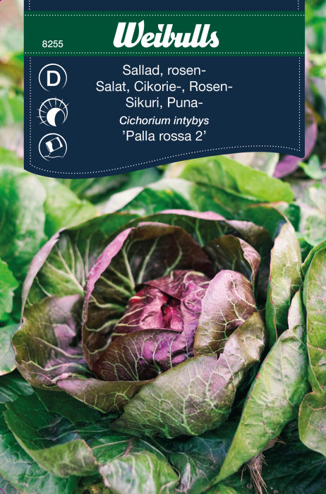 Salat ´Palla Rossa`