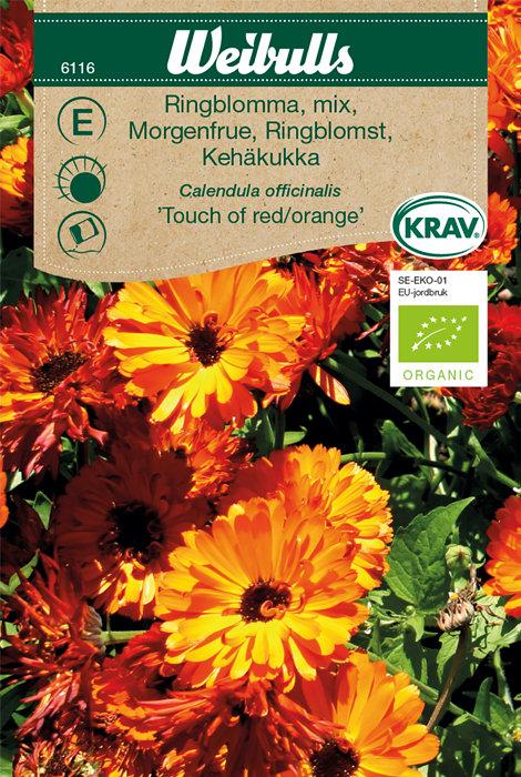 Morgenfrue økologisk - Touch of red/orange
