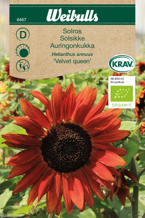 Solsikke økologisk - Velvet queen