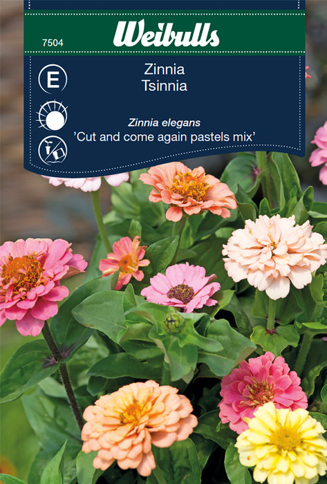 Zinnia - Cut and come again pastels mix