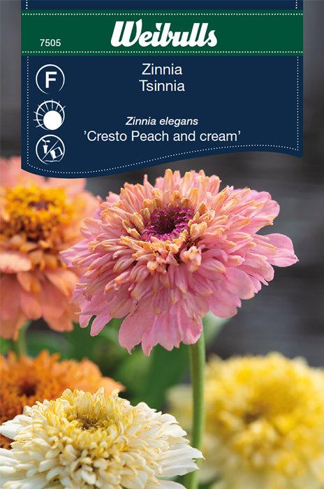 Zinnia - Cresto peach and cream