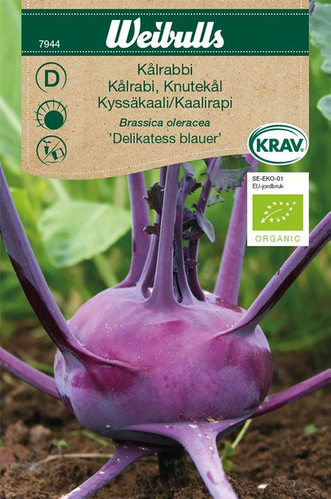 Kålrabi økologisk - Delikatess blauer