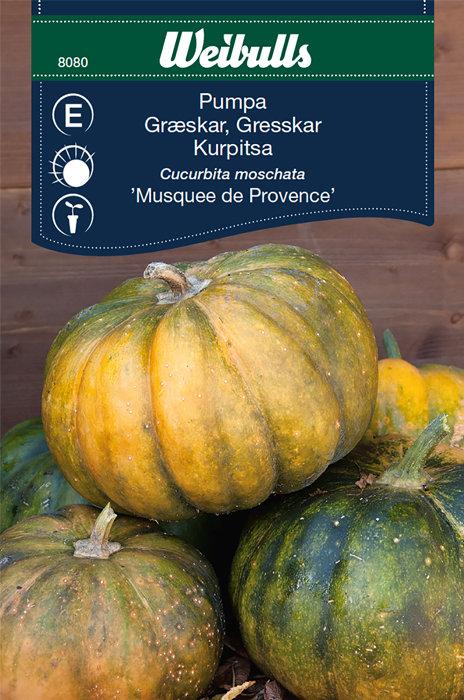 Græskar - Musquee de Provence