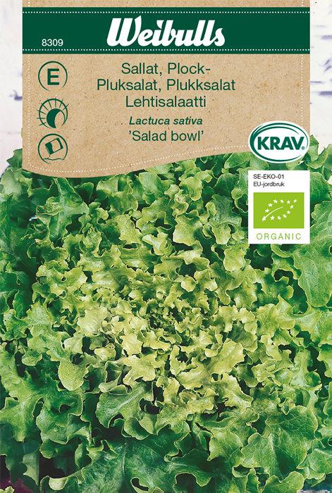 Pluksalat økologisk - Salad bowl